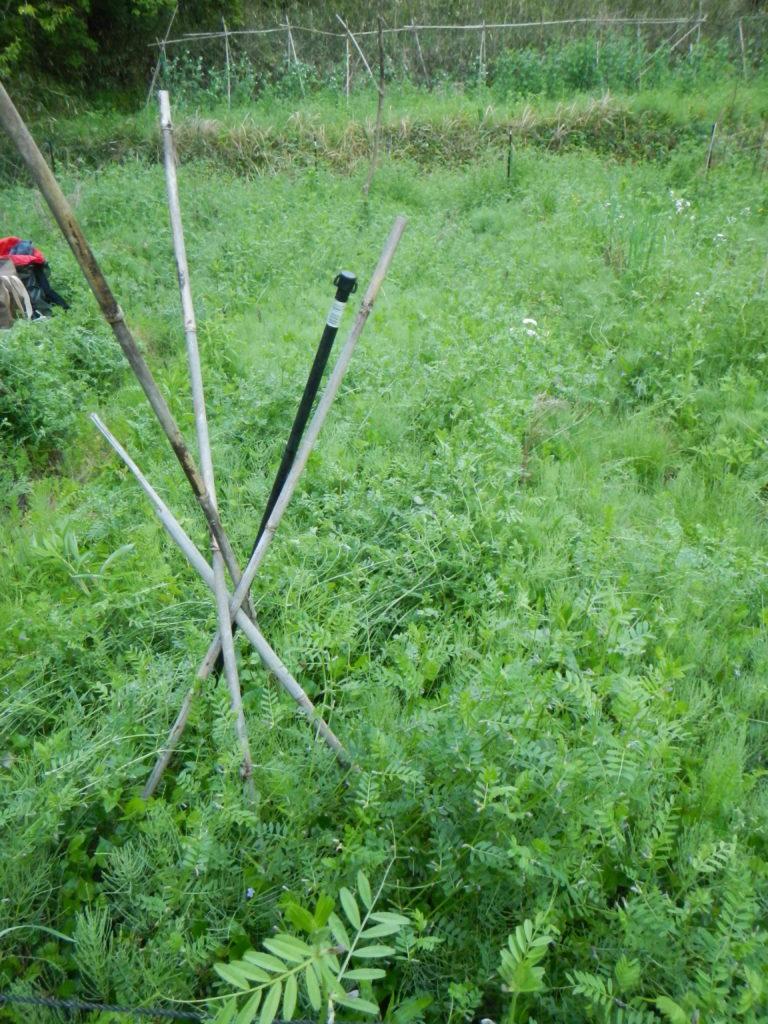 トマト植え付け前の畝